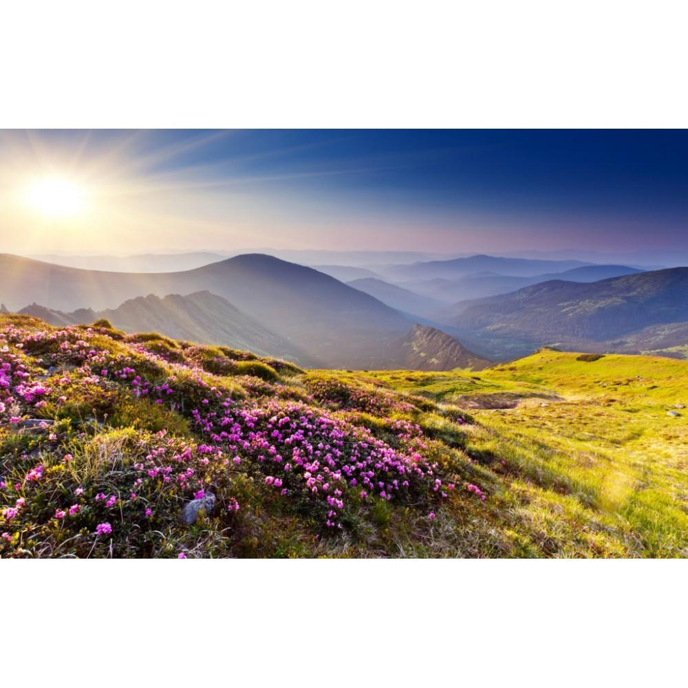 Саган-Дайля с цветами (Рододендрон Адамса, сагаан дали, сайган-дайля) 50 г